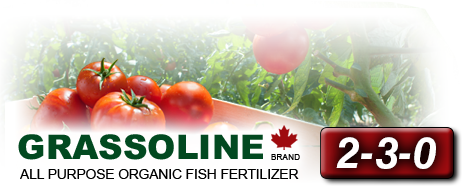 Grassoline All purpose organic fish fertilizer 2-3-0